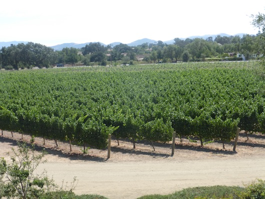 Wine Tasting By Santa Barbara Roblar Winery